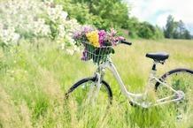 Galeria Wycieczka rowerowa - przykład